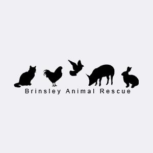 brinsley